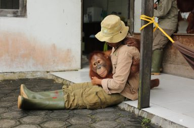 https://www.channel4.com/press/image-search?search=orangutan%20jungle%20school