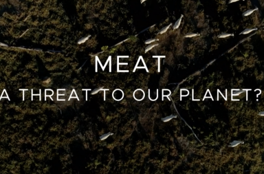https://www.bbc.co.uk/iplayer/episode/m000bqsh/meat-a-threat-to-our-planet