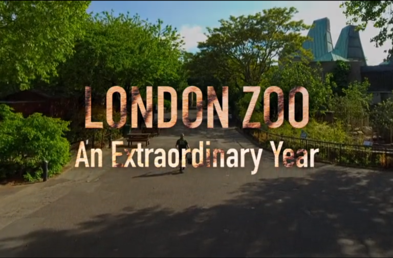the london zoo an extraordinary year