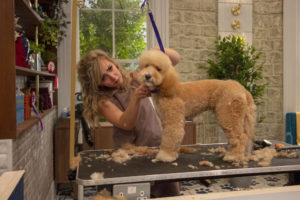 Where is Pooch Perfect filmed? BBC's grooming show location revealed!